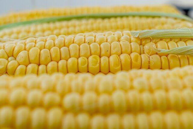 mısır kalori oranı - mısırın kalorisi - 1 adet mısır kaç kalori